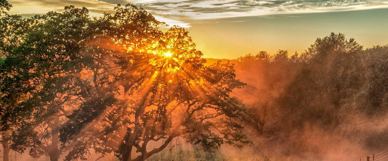 sunlight thru tree